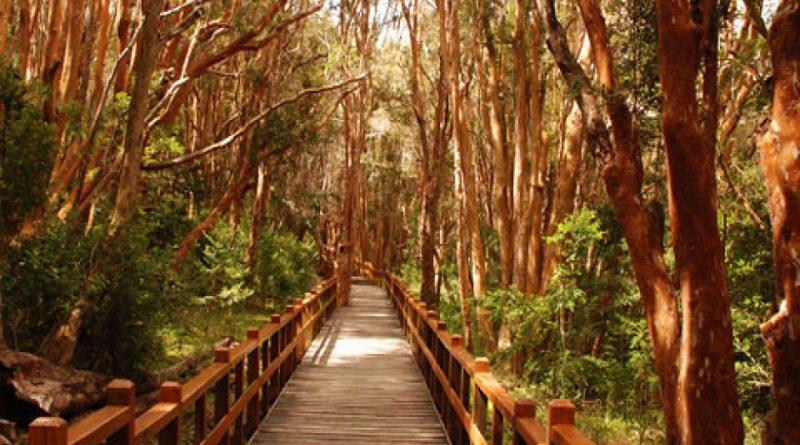 Parques Nacionales. Ley 22.351