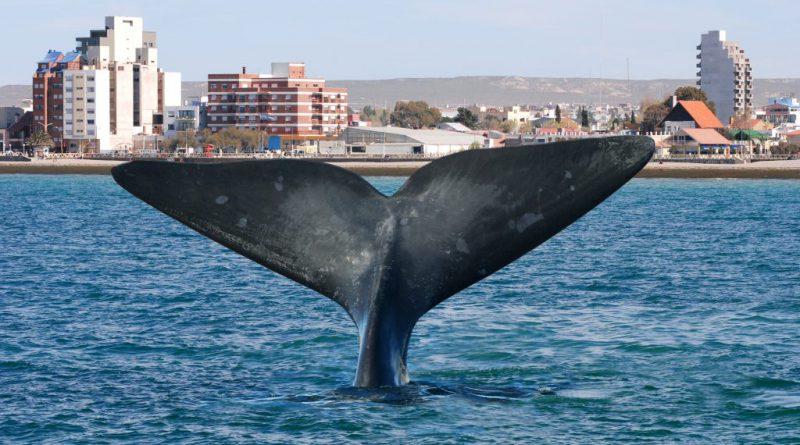 Chubut. LEY XXIII- N° 49 – Declara a la Actividad Turística como prioritaria dentro de las Políticas de Estado